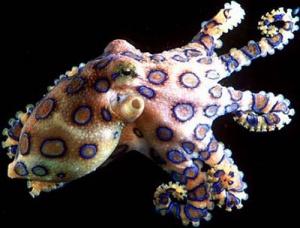 Удивительные осьминоги