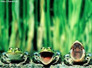 факты о лягушках