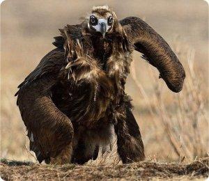 орлы - хищные птицы
