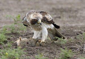 Легендарная  птица  орёл