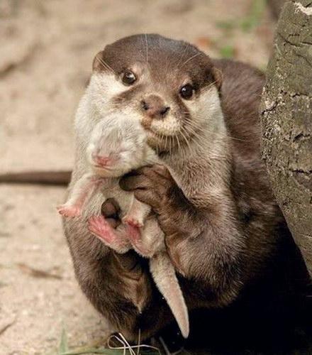 бесплатные прикольные картинки животных: