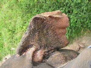 Эти удивительные слоны