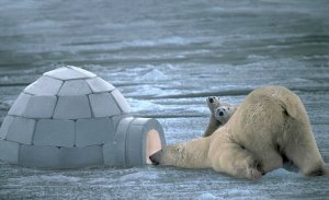 Удивительные факты о медведях