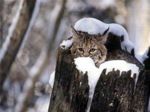Фото котят и вопросы о кошках