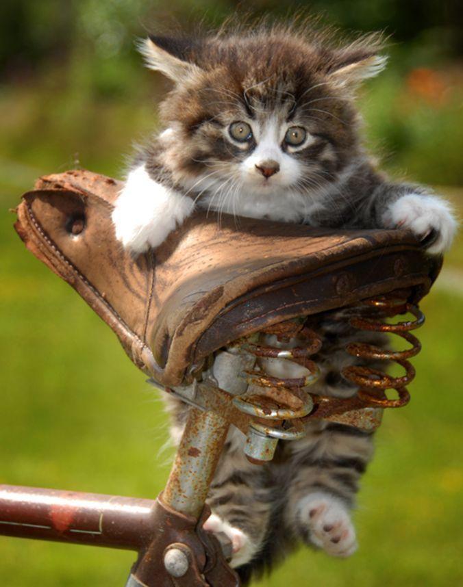 Картинки по запросу смешные кошки
