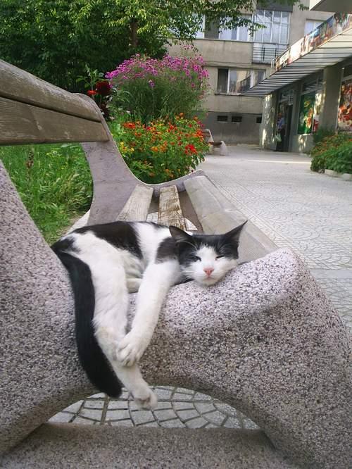 Все кошки и коты считают что если