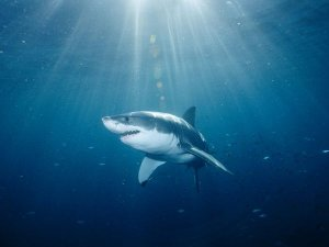 Как обезопасить себя от акулы