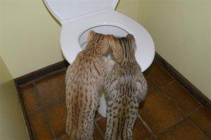 смешные фото кошек смотреть