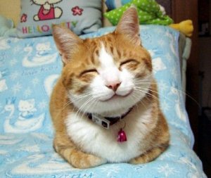 самые смешные кошки