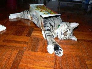 Где спят кошки