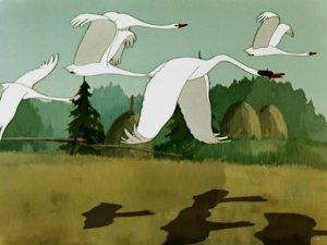 Лебедь белая и чёрный лебедь