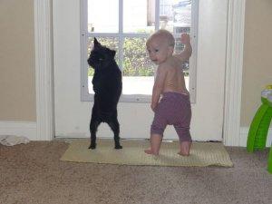 дети играют с животными