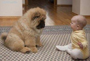 дети дружат с  животные