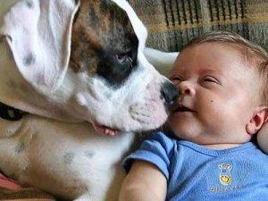 дети и животные: факты