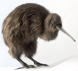 Какая птица вынашивает самые большие яйца