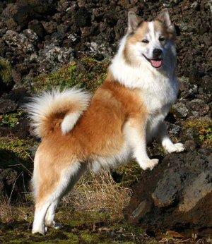 удивительные собаки
