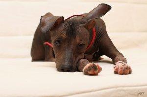 ксоло-удивительный мир животных