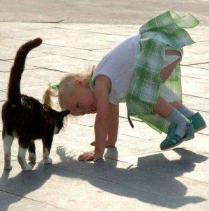 Ох уж эти смешные кошки!!!