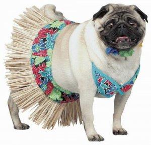 Гардероб для собаки
