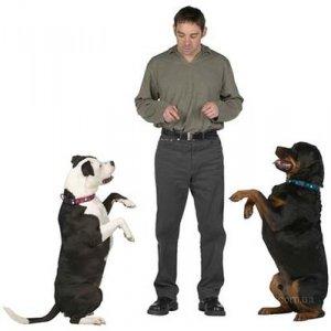 """Дрессировка собак - команда """"Ко мне"""""""
