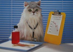 Нетрадиционные методы лечения при помощи животных
