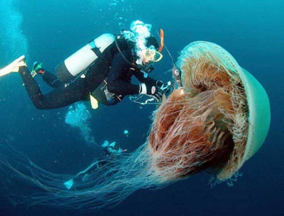 самые странные животные планеты 1368266961_giant_scary_jellyfish_meduza