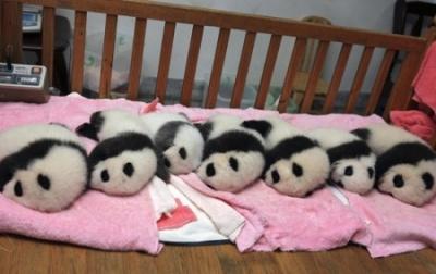 Что едят панды