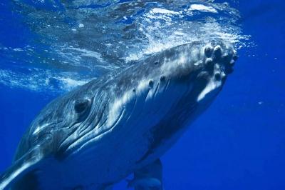 Самое интересное о китах