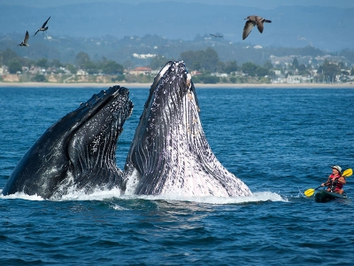 Песни китов