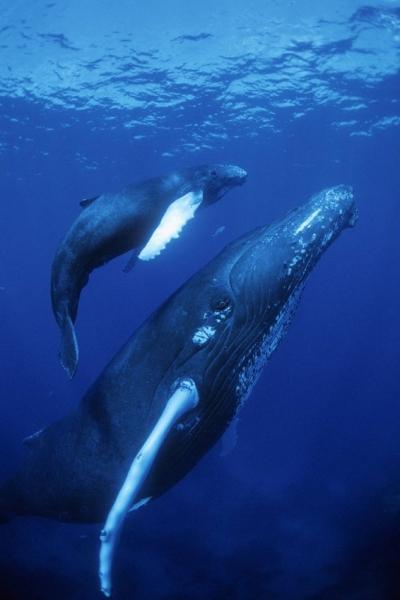 Детёныши китов