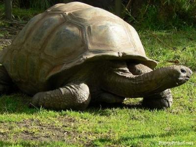 самые странные животные планеты 1380707737_1306557002_bolshaya-cherepaha