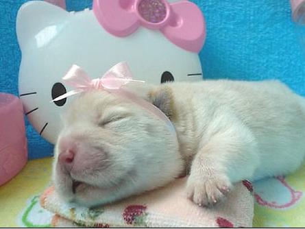 Фотографии щеночков и стихи про щенят