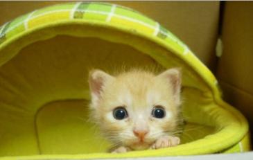 Про маленьких котят