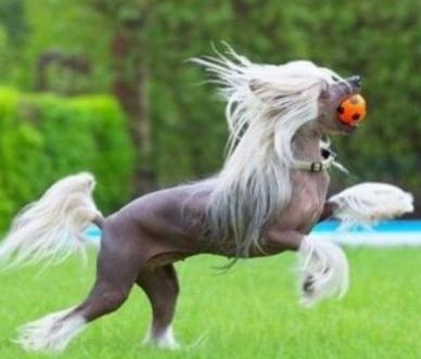 Кто такие лошади?