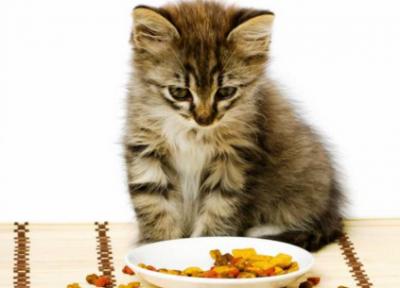 Кормление котёнка
