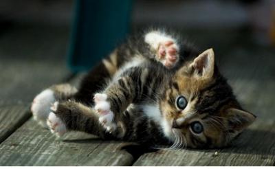 Как понять котенка