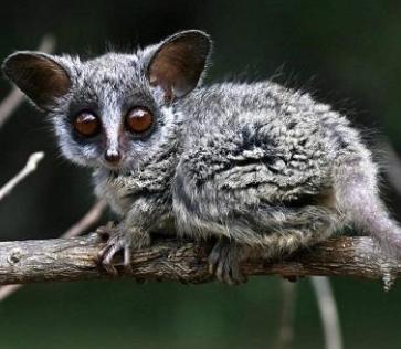 Необычные животные мира